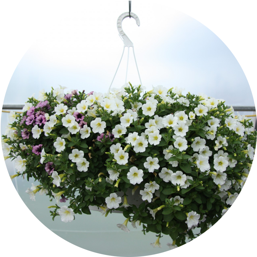 Hanging Baskets (Seasonal)